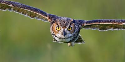 7_Great_Horned_Owl_Jim_N