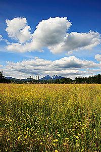 Landscape-f22